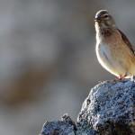 Espanha-birdwatching_62