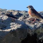 Espanha-birdwatching_64