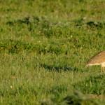 Espanha-birdwatching_65
