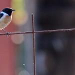 Espanha-birdwatching_66