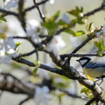 Espanha-birdwatching_71