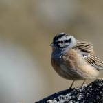 Espanha-birdwatching_79