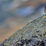 Espanha-birdwatching_80