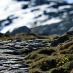 Espanha-birdwatching_81