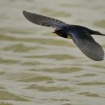 Espanha-birdwatching_85