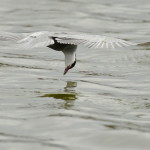 Espanha-birdwatching_86
