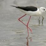 Espanha-birdwatching_87