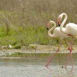 Espanha-birdwatching_88