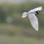 Espanha-birdwatching_89