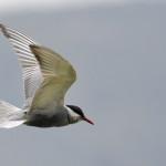 Espanha-birdwatching_90