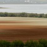 Espanha-birdwatching_91
