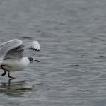 Espanha-birdwatching_93