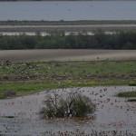Espanha-birdwatching_94