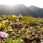 Rocky-Mountain-NP_02