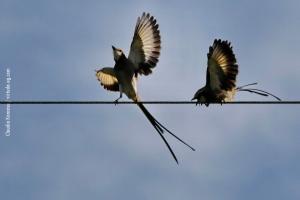Minas-Gerais_birdwatching_11