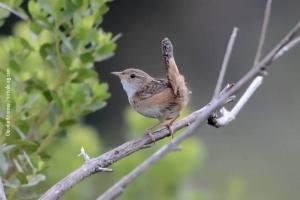Minas-Gerais_birdwatching_26