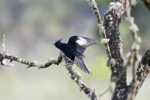 Minas-Gerais_birdwatching_32