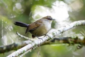Minas-Gerais_birdwatching_33