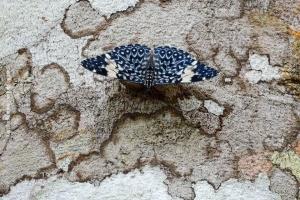 Minas-Gerais_birdwatching_39
