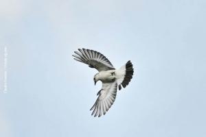 Minas-Gerais_birdwatching_43