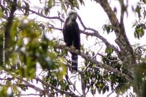 Minas-Gerais_birdwatching_63