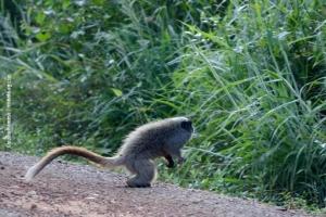 Minas-Gerais_birdwatching_65