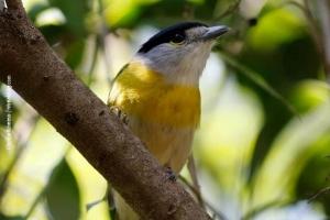Minas-Gerais_birdwatching_66