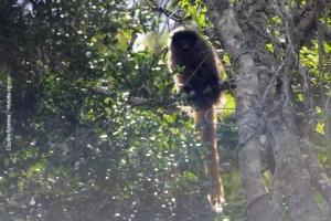 Minas-Gerais_birdwatching_73