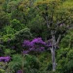Birdwatching na região das Cidades Histórias de Minas Gerais, mar/2016