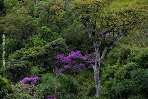Minas-Gerais_birdwatching_77