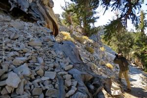 Bristlecone-Pine-Forest_06