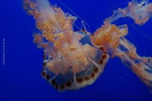 Monterey-Aquarium_01