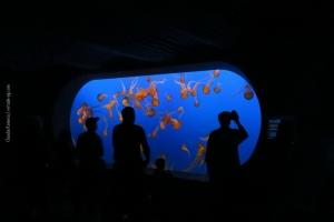 Monterey-Aquarium_02
