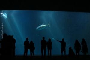 Monterey-Aquarium_03