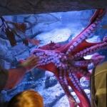 monterey-aquarium_04