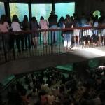 monterey-aquarium_08