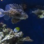monterey-aquarium_09
