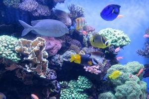 Monterey-Aquarium_10