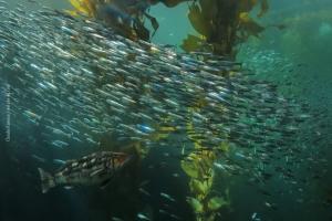 Monterey-Aquarium_11