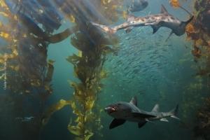 Monterey-Aquarium_12