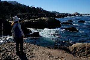 Point-Lobos_nature_01