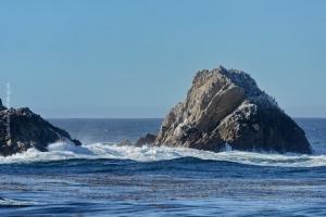 Point-Lobos_nature_05