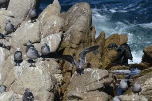 Point-Lobos_nature_09