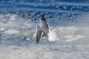 Point-Lobos_nature_12