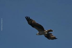 Point-Lobos_nature_13