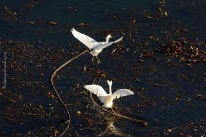 Point-Lobos_nature_15