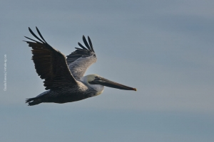 Point-Lobos_nature_18