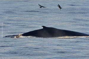 Point-Lobos_nature_21
