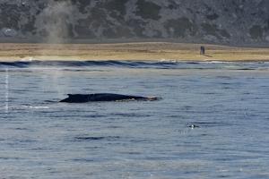 Point-Lobos_nature_22