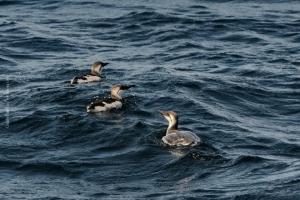 Point-Lobos_nature_23